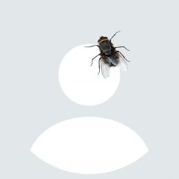 WhatsApp Profilbild mit Fliege auf Kopf