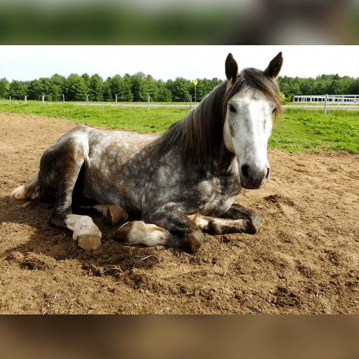 Profilbilder Mit Pferden Whatsapp Profilbilder
