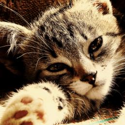 Profilbilder mit Tieren wie Katze oder Hunde