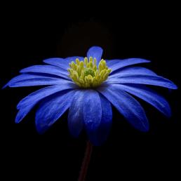 profilbild mit blumen